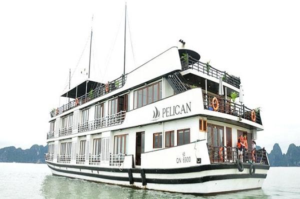Pelican-Cruise-QN6900
